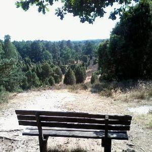 Borstel, super Weitsicht und alte Bäume, ruhig