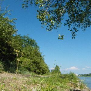 Neuwied Rheinufer